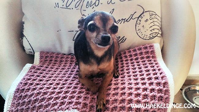 Hundedecke Im Waffelmuster Gehäkelt Häkeldinge